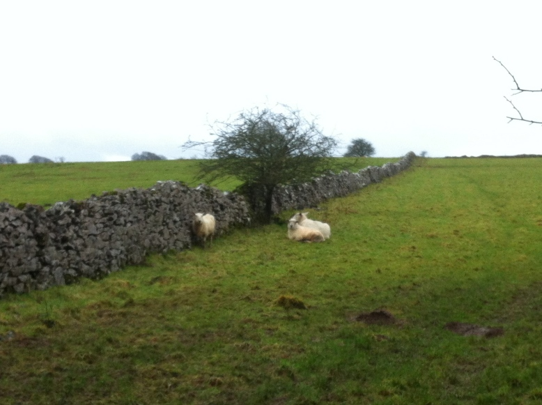 And strong gusts of wind (at least the sheep had the right idea)
