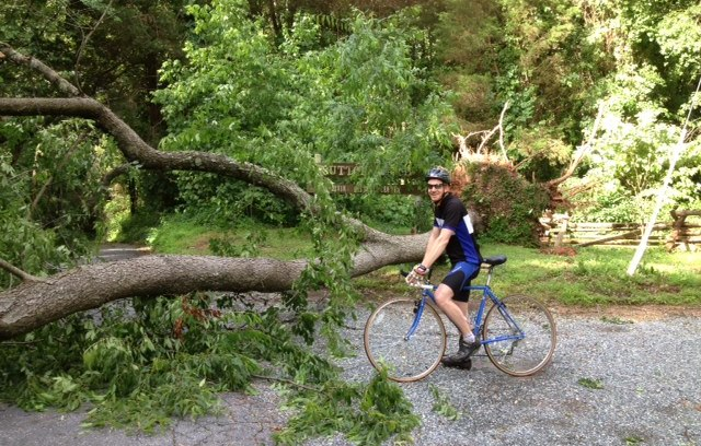 Faced with a fallen tree