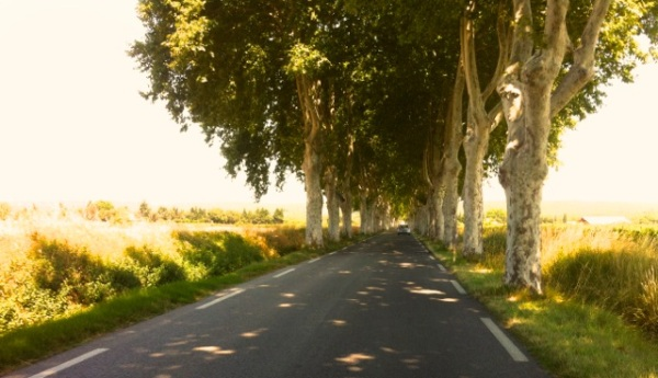 Quintessentially French: tree lined roads provided welcome shade